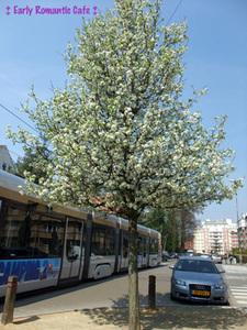 ベルギーの春