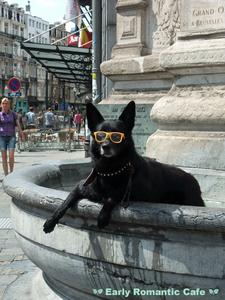 ベルギーの犬